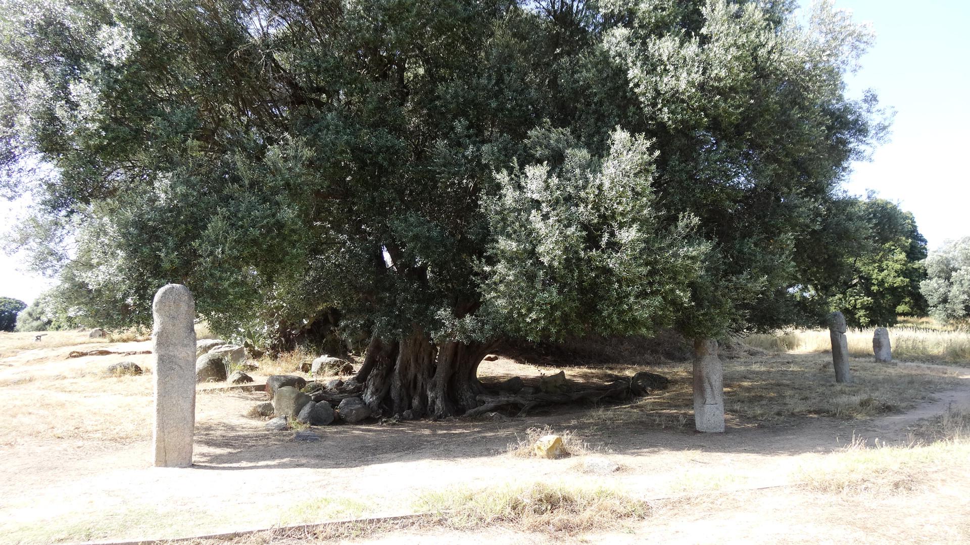 Les statues menhirs de Filitosa